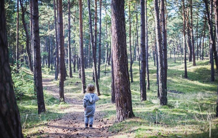 chłopiec wędruje w gęstym sosnowym lesie
