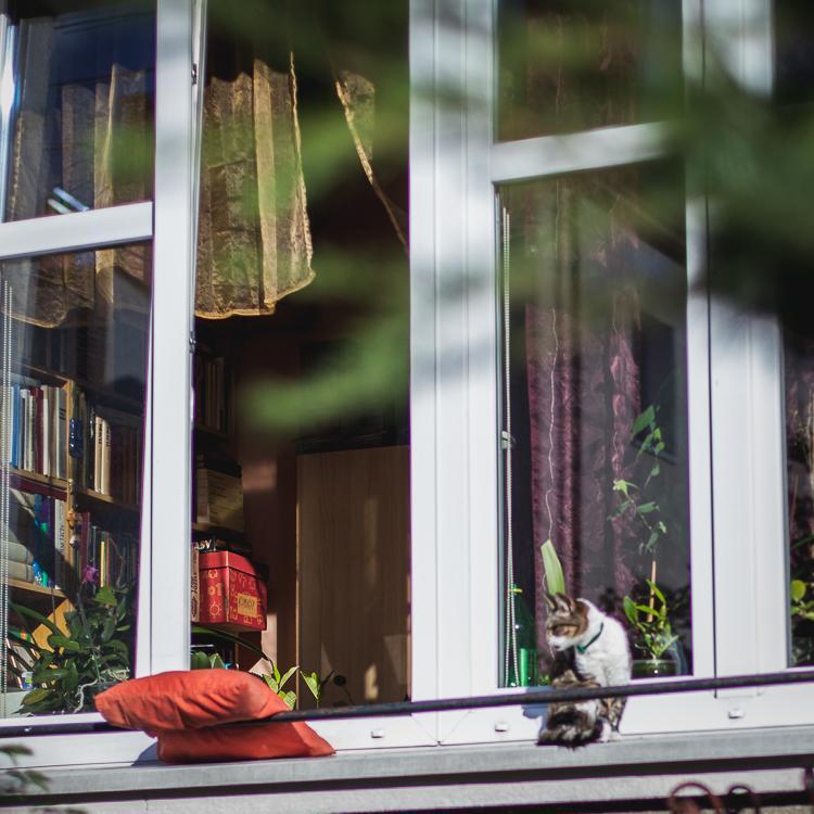 okno jednej z kamienic przy ulicy Liczmańskiego w Oliwie
