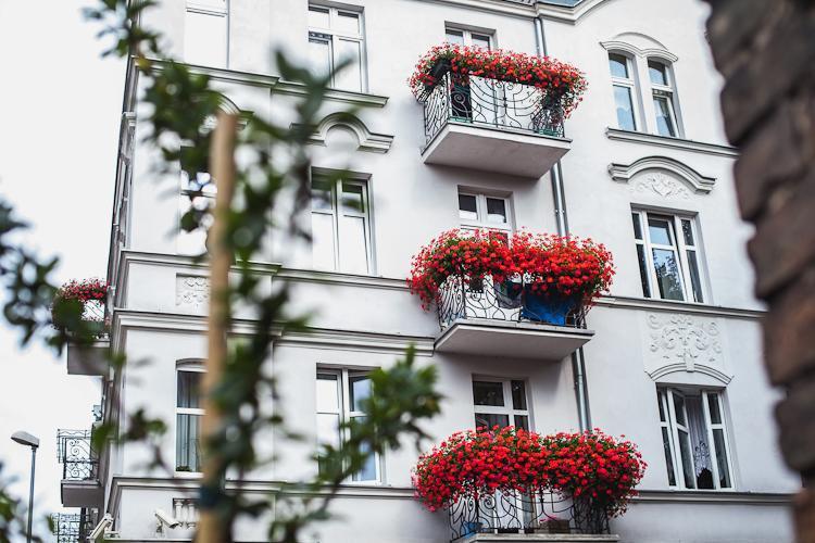 Młode drzewka posadzone przez mieszkańców na ul. Zielonej na Dolnym Mieście w Gdańsku