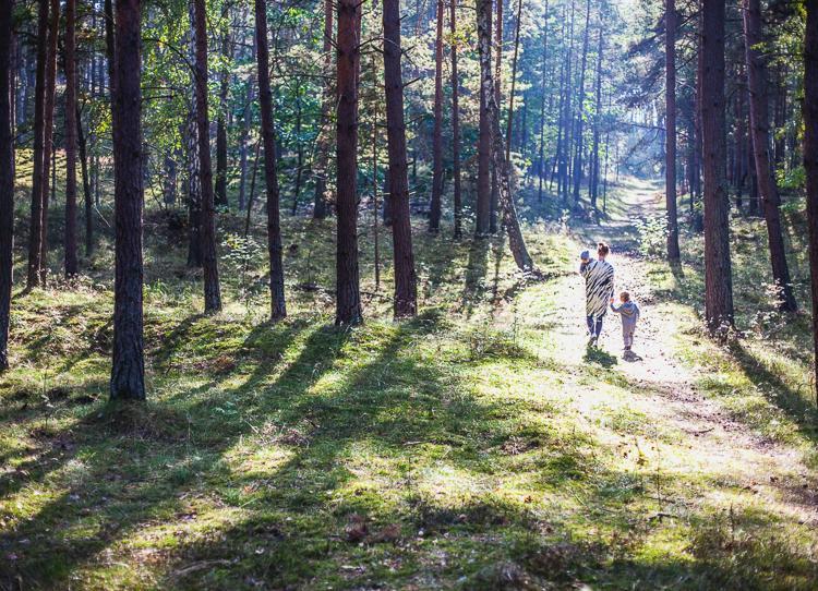 rodzina spaceruje po gęstym sosnowym lesie oświetlonym promieniami jesiennego słońca